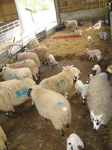 Godstone Farm 116