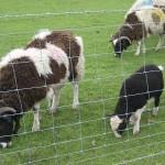 Godstone Farm 184