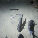 Aquarium 2012 012