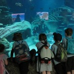 Aquarium 2012 027