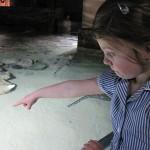 Aquarium 2012 011
