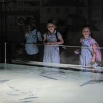 Aquarium 2012 013