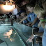 Aquarium 2012 017