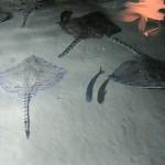 Aquarium 2012 018
