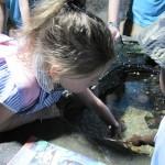 Aquarium 2012 021