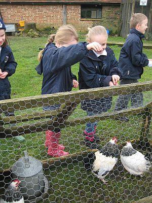 Ladyland Farm 013
