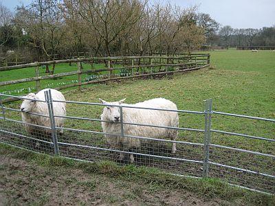 Ladyland Farm 054
