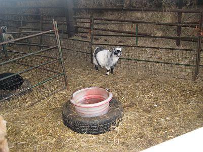 Ladyland Farm 078