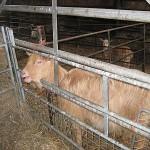Ladyland Farm 079
